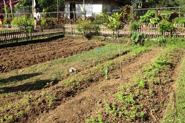 Indigo Farm in Brgy Pang-itan, Madalag, Aklan