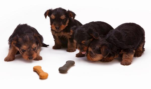 Pet Institute Dogs