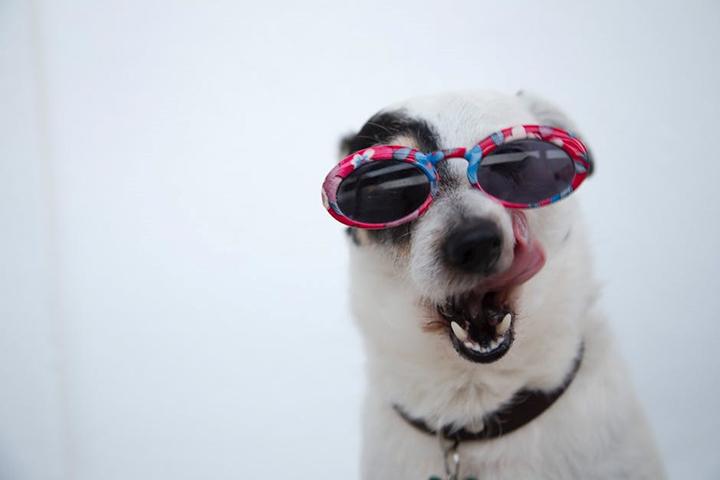 Pet Heatstroke is Not a Joke! Pet Food Institute shares tips on how to avoid heatstroke in pets