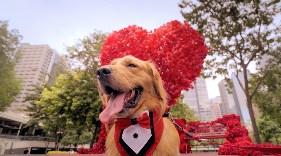 A Furtastic Valentine's Day from BGC