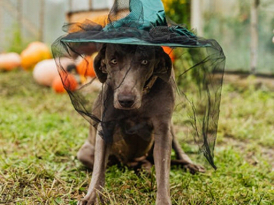 Avoid Pet Care Scares this Halloween
