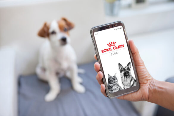 Start your pet parenting journey with Royal Canin Club