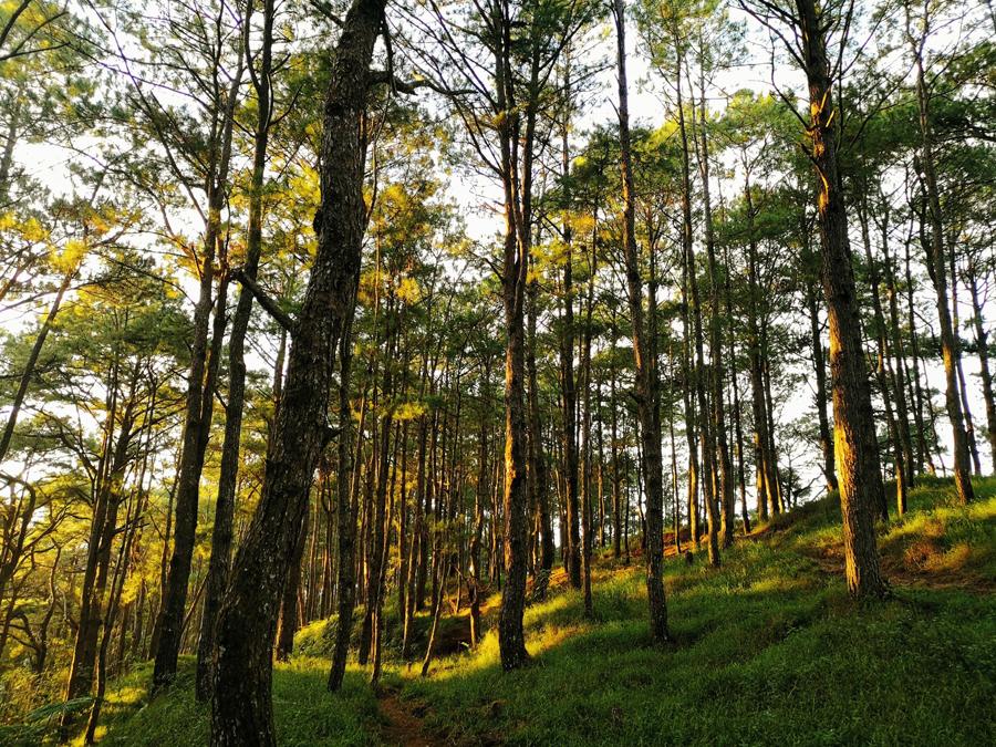 Sekaya gives 5,190 endemic tree seedlings to the Cordillera reforestation efforts