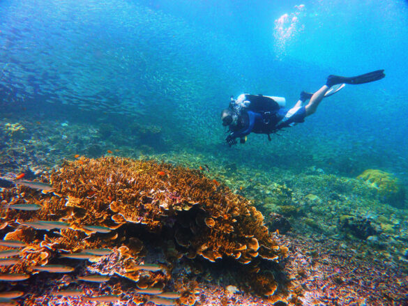 PH cited Asia's top beach and dive destination anew in 2021 World Travel Awards