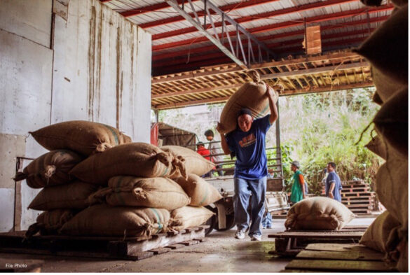 Nestlé local coffee buying up 39%, joins TESDA to train coffee scholars